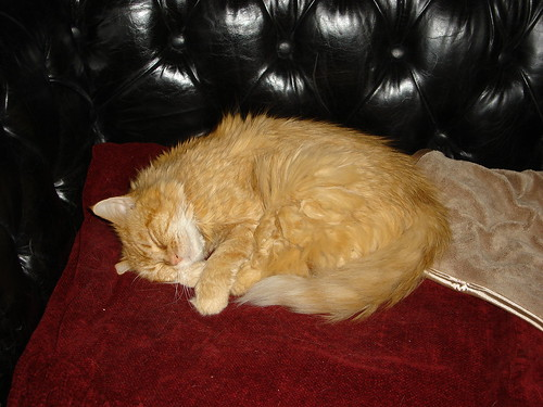 Sleeping Sweet Kitty 1109 002