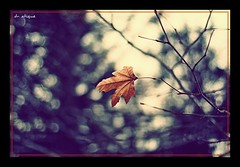 the loneliness....thank God i have U :)) (dr. atique de malique << back on track >>) Tags: winter nature leaves canon season eos 50mm leaf flickr loneliness bokeh 14 ukraine estrellas crimea 450d flickraward flickrbestpics