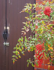 The Secret Door. (Esther Spektor - Thanks for 11+ millions views..) Tags: wood light red plants brown green texture leaves sunshine wall outdoors branch doors exterior bricks sensational everydaylife coth stillphotography supershot bej awesomeblossoms