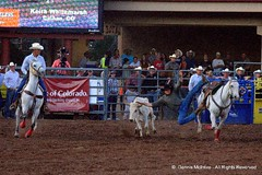Steer Wrestling (RetiredTraveler) Tags: colorado 4th july parade springs rodeo retiredtraveler