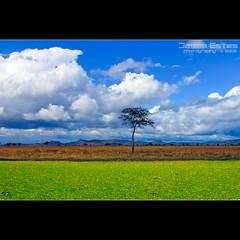 Tanzania - 2006 (Jesse Estes) Tags: africa clouds tanzania safari swamp jesseestes jesseestesphotography