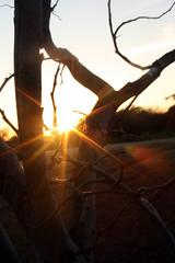(simply_precious) Tags: sunshine hope branches twisted sunflare jasonmraz shinebright imyours