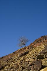 Natural (Carme MV Photography) Tags: blue sky naturaleza tree nature azul canon landscape eos andalucía raw huelva paisaje cielo árbol 1855mm minasderiotinto cuencaminera 400d vosplusbellesphotos kddriotinto300110 kddhuelvaysusfotógrafos