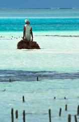 _IGP2525 (orang_asli) Tags: africa sea portrait people woman mer seaweed beach water landscape tanzania coast eau femme côte zanzibar farmer paysage plage lieux afrique aficionados métier naturel peuples tanzanie algue jambiani catégorie géographie agriculteur tanzanien c™te gžographie mžtier catžgorie