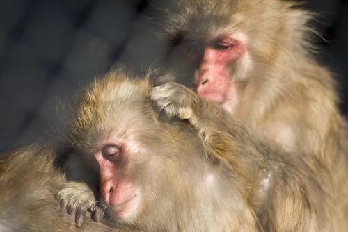 小田原城 猴子 monkey