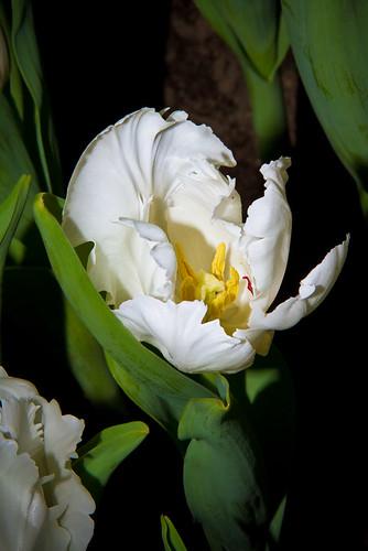 weiße Blütenpracht - joerg esser fotografie