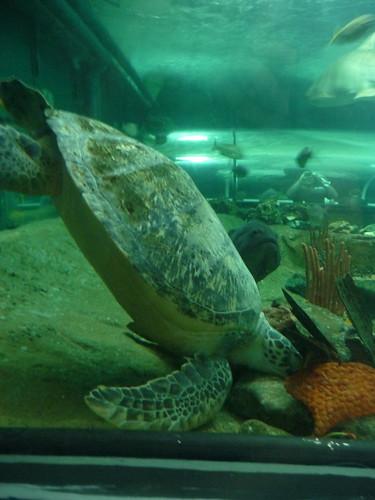 Jon's Visit: Sydney Aquarium