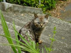 DSCN3229 (pladge_atsuko) Tags: cats sendai matsushima miyagi