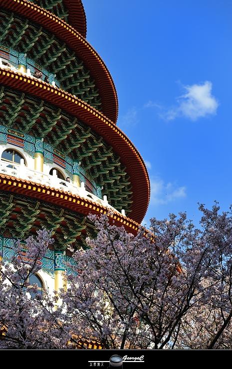 Sakura sunny 12