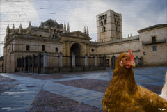 Clotil la Gallina  y  la Catedral