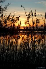 Sunset at the Rietplas