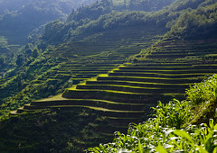 Terrace rice fields, Yunnan, China (Eric Lafforgue) Tags: china  kina chin cina chine xina    tiongkok  chiny  kna in   trungquc na  kitajska tsina       a0006475