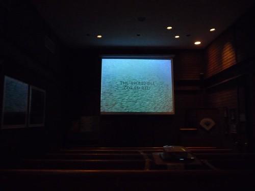 coral reef video.
