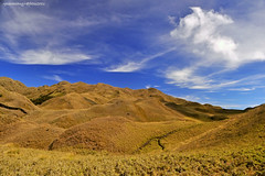 mt. pulag... (dHaN'z) Tags: sky mountain clouds mt philippines pulag benguet kabayan