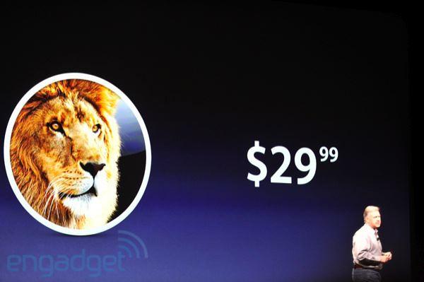 Lion29