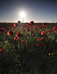 Blinded By The Red (Cowboy 55) Tags: red sun flower green nikon tokina f lee poppies 28 filters lanscape 1116mm d300s