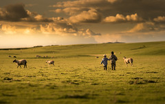 My boys in Ireland (iwona_podlasinska) Tags: sheep clouds field grass open boys children