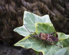 Insecte ??? (Kaya.05) Tags: insecte nature extérieur lumièrenaturelle macro couleur canon5dsr hautesalpes france yourbestoftoday bokehlicious bokehwhores bokeh