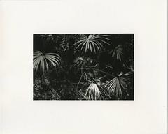 (?) Tags: trix darkroomprint kyoto japan fiber warmtone ilford