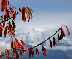 Feuilles et ciel d'automne (Larch) Tags: autumn red france alps fall leaves clouds alpes automne rouge leaf niceshot nuages cherrytree montblanc cerisier feuille branche hautesavoie cordon wow1 wow2 wow3 graciasalavida concordians oltusfotos chanedumontblanc mygearandme blinkagain bestofblinkwinners flickrstruereflection1 flickrstruereflection2