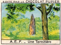 pupier afrique039