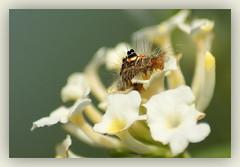 Worm (Mayur Kotlikar) Tags: flowers india macro garden botanical li sony di 300 alpha a200 tamron incredible 70 nagpur mayur kotlikar telankhedi