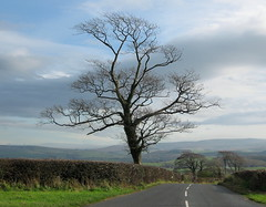 The tree at the crossroads (Lune Rambler) Tags: road autumn sky tree nature clouds landscape lane 1001nights crossroads fell hedges thegalaxy lunevalley platinumphoto anawesomeshot diamondclassphotographer flickrdiamond platinumheartaward kelletroad platinumsuperstar rubyphotographer saariysqualitypictures platinumbestshot recolix lunerambler 1001nightsmagiccity mygearandmepremium mygearandmebronze mygearandmesilver mygearandmegold mygearandmeplatinum mygearandmediamond aboveandbeyondlevel1 4timesasnice 6timesasnice 5timesasnice 7timesasnice aboveandbeyondlevel2 aboveandbeyondlevel3