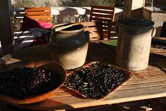 olives 002
