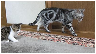 休み中に撮った猫 Photo By CANON PowerShot S90