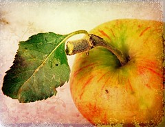 an apple a day (Adrinne - for a better and peaceful world -) Tags: autumnsunshine anappleaday specialpicture adrinne vosplusbellesphotos addyvanrooij graphicmaster terami09