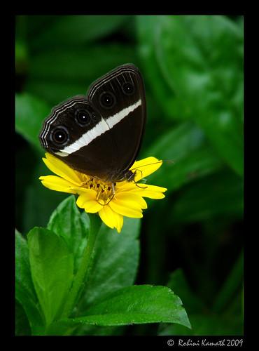 butterfly_blackWhite