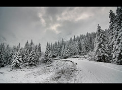Moving through a Monochromatic World (edmundlwk) Tags: trees winter white mountain snow pine landscape poland christmastrees coniferous subzero zakopane morskieoko tatramountains swisspine canon450d flickrchallengegroup flickrchallengewinner tatrzańskiparknarodowy tatranationalpark rebelxsi tokina1116mm edmundlim
