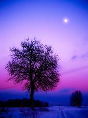 "Winter sunset and ""moonrise"" :) (raphic :)) Tags: road blue winter sunset sky moon tree nature lumix magenta poland polska dirty panasonic moonrise zima niebieski droga ksiyc przyroda drzewo niebo blueribbonwinner zachdsoca raphic fze dmcfz8 photographymypassion mygearandmegold wierzchoniw"