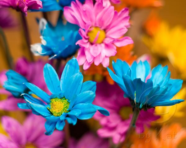 flowers0102