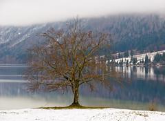 Tree (Karmen Smolnikar) Tags: cloud lake snow tree nature water slovenia slovenija bohinj fotocompetition fotocompetitionbronze fotocompetitionsilver