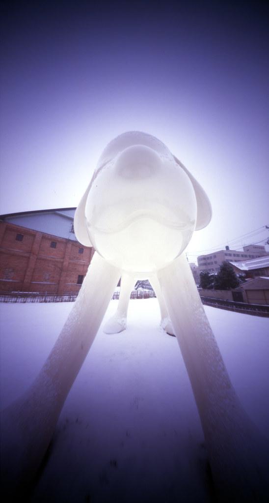 2009/12/18 弘前市 ワンコ