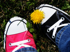 Not one.... (im thinking outloud) Tags: blackandwhite green grass anniversary dandelion celebration converse hightops chucks laces brandnew quitsmoking mismatched raspberrypink