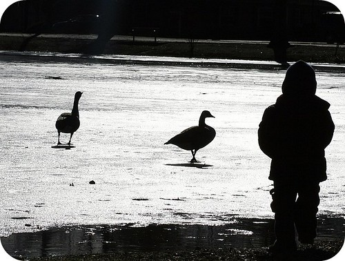 Ice skating with the geese
