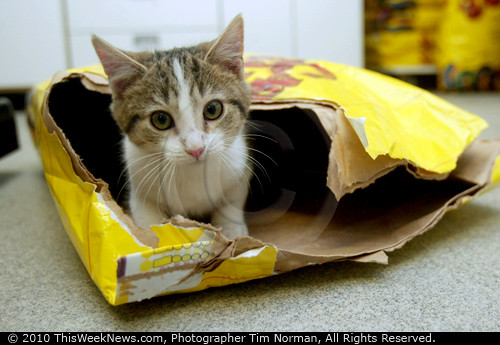 Kitten in food bag