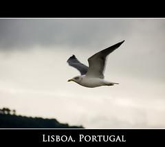 Fly Like a Bird (Ai-Gie (Back in Malaysia)) Tags: bird portugal animal clouds coast flying holidays bokeh lisboa sigma 18200mm winterholiday canon450d theoriginalgoldseal