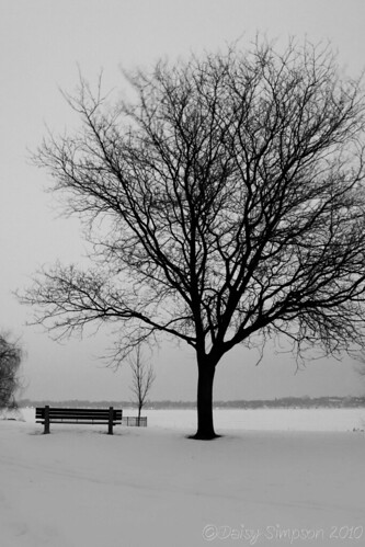 bench and tree B&W