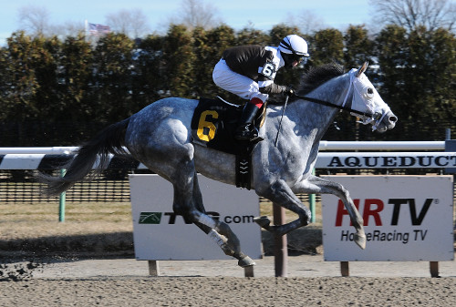 New York Watch: Tempted to Tapit