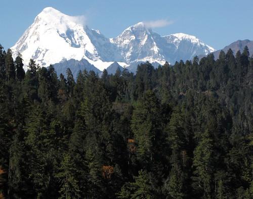 Jumolhari & forest