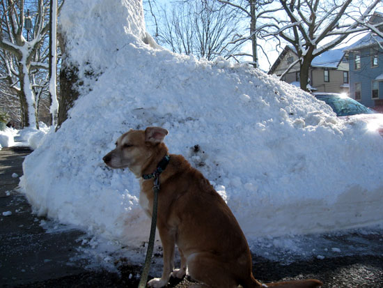 Una with a Snowpile