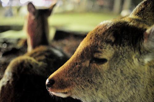Deer's vision03 NaraRurie