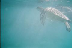 0000002-R1-002-00A_001 (Moustachios) Tags: hawaii snorkeling hanaumabay