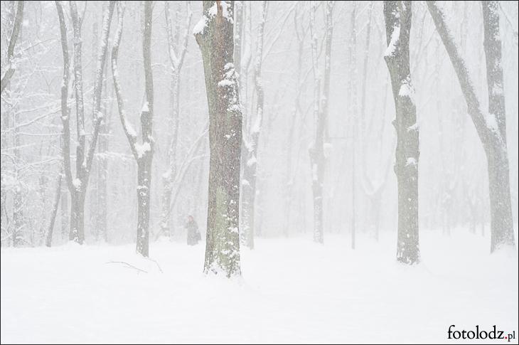 Park na Zdrowiu w śniegu