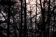 lakeshore (dmixo6) Tags: sunset ontario canada nature water march spring muskoka dugg dmixo6