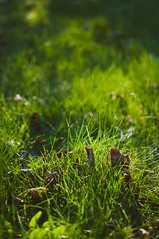 57/365 - Spring is Here (seanmcgrath) Tags: sun slr nature sunshine outdoors spring nikon bokeh availablelight style gear naturallight sunny places things noflash nb best newbrunswick 365 nikkor dslr kv dx lightroom naturallighting preset d90 35mmf18 presets nbphoto quispamsis nikond90 lightroompresets thebestlgihting newbrunswickslrsunnbphotonikonkvlightroompresetsnbdslrthingsnaturallightinglightroomavailablelightbokehnaturallightstyle35mmf18outdoorsnikkornaturenoflashpresetquispamsisnikond90presetsgearspringsunnyd90thebestlgiht lgihtingstylenikon d90kv35mmf18lightroom presetsdslrnatural lightingnikkorquispamsisavailable lightlightroombokehnaturenatural lightpresetpresetsspringsunnythingssunshineplaces36535mm f18gearslrsund90new brunswickdxoutdoorsnbphotonikonno flashnb