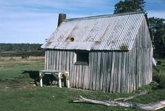 Tin Mine Hut, 1984 (NettyA) Tags: film 35mm australia slide victoria huts hut bushwalking 1984 scanned kodachrome slides thepilot charliecarter tinminehut janettetomsett